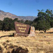 sequoianf
