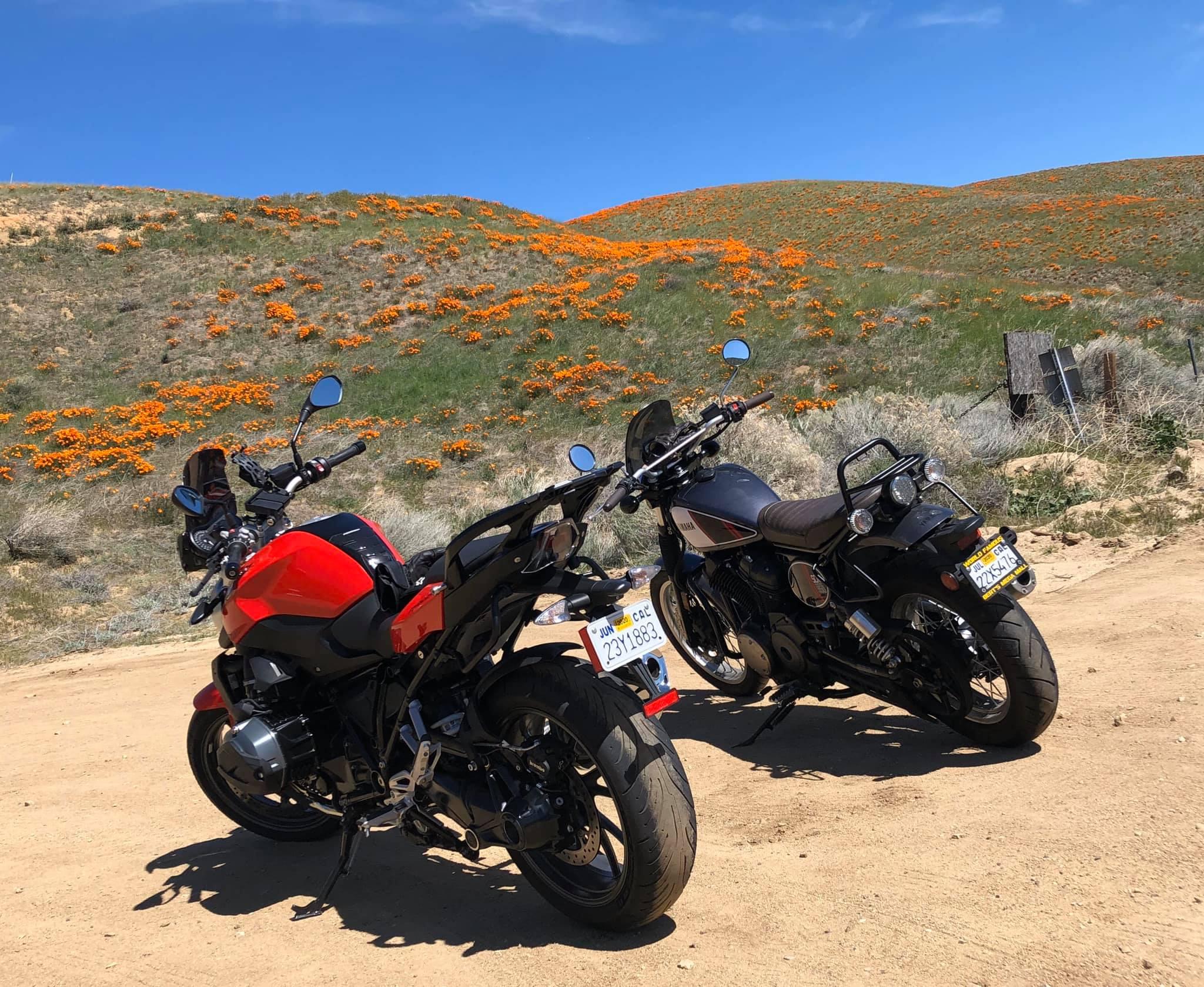 Poppy fields of Antelope Valley